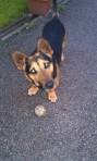 Vjerni pas u nevjerici..kad me vidio