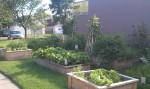 spinat,paradajz, krumpir, mrkva, kupus,